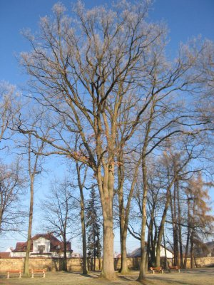 Stromy v zámeckém parku