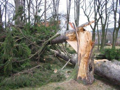 Stejný strom přez den